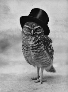 Like a Sir level: owl