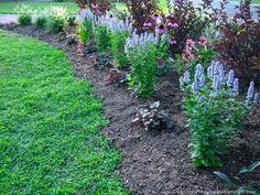 Heuchera 'Palace Purple', Agastache 'Blue Fortune', Echinacea purpurea 'Magnus' and Physocarpus opulifolius 'Summer Wine'