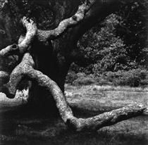 The Tree 35 - Aaron Siskind - Abstract Expressionism, Photo, 1973 History Of Photography, Street Photography, Art Photography, Op Art, Rhode Island, Mysterious Places On Earth, Aaron Siskind, Magic Eyes, Photo Journal