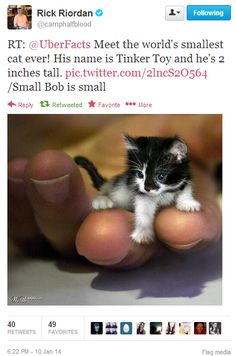 TINKER TOY IT'S T AS A CAT!!! Weak and helpless.... NAILED IT!
