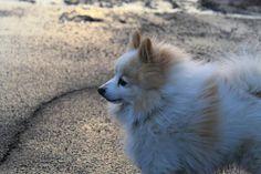 My dog. Blanco