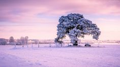 Śnieg, Drzewo, Ogrodzenie