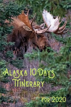 You want to go to Alaska and don't know how to plan your trip? We done it for you! Here you will find ready to go 10 days Alaska itinerary. Alaska Travel, Canada Travel, Alaska Cruise, Usa Travel Guide, Travel Usa, Travel Tips, Alaska Fishing, Fishing Tips, Alaska Northern Lights