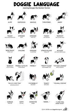 Doggie Drawings by Lili Chin
