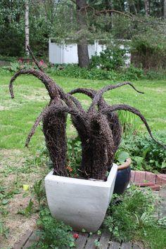 risutaidetta / garden Garden, Plants, Garten, Lawn And Garden, Gardens, Plant, Gardening, Outdoor, Yard