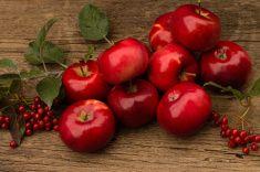 Многие красные яблоки на деревянном фоне stock photo