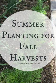 Want to make the most of the growing season? See the best plants for summer plants that you can harvest in fall!