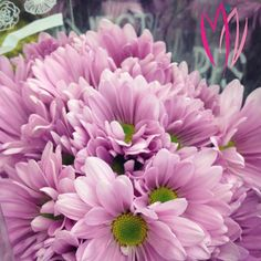 These stunning daisies will wash the winter gray away. #Flowers #Petals #Pretty #Blooms #Floweroftheday #Purple