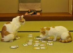 【萌え死に注意】 百人一首に挑戦する、猫の画像wwwwwwwwwwww 可愛すぎる!!