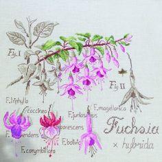 Étude au Fuchsia (maxi-grille) à broder au point de croix