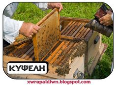 6 Sweet Reasons Every Homesteader Should Raise Bees - Off The Grid News Beehive Image, Photo Dictionary, Off The Grid News, Beekeeping For Beginners, Raising Bees, Bee Sting, Learn Faster, Thing 1, Bee Keeping