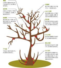 植木の剪定は難しくない、今から植木の剪定をはじめよう まずは、剪定道具を揃えよう 植木の剪定をする上で準備しておきたいモノがこちら。 剪定用はさみ ノコギリ ごみ袋 脚立(3~4尺あれば2.5m~3mぐらいの木まで届く) 今回ご紹介するのは、自宅に植えたシンボルツリーなどの簡単な剪定です。植木屋さんに頼む程ではないけど、ほっといたら伸びてしまうし、どうしたらいいかわからない人に参考にしてもらいたいと思います。専門の植木屋さんに比べたら簡単ですので、チャレンジしてみたら意外とできるかもしれませんよ。 どの枝を切ればいいの? 剪定について調べると、この枝を切れって書いてありますが、難しく考えずに、… Bonsai Pruning, Tree Pruning, Garden Trees, Trees To Plant, Garden Plants, Conifer Trees, Deciduous Trees, Landscape Design, Garden Design
