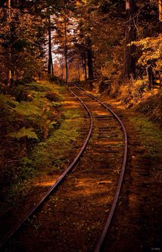 Railroad in the middle of nowhere #nature #train
