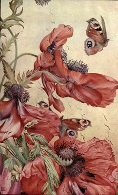 Edward Detmold, illustrator Amapolas from 'News of spring and other nature studies' 1917