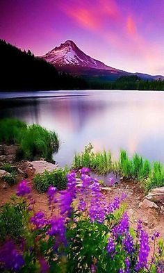 Natureza púrpura.