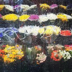 Raindrops & flowers  #inthahood  DelissellflowersBodegasdontville