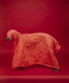 William Wegman | Panopticon Gallery