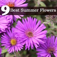 9 Best Summer Flowers