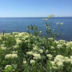 Du danske sommer jeg elsker dig  #webshop #påsmuttur #medfamilien #jylland #viborg #herewecome #sommer #weekend #danmark #takforbestillinger #pakkersendesmandag