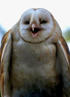 Laughing Owls-This one is not blinded by the light needed by the photographer (all the others up until this at the source are squinting)