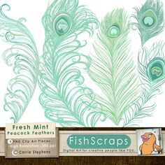 Peacock Feather Clip Art | Peacock Feather Clip Art - Fresh Mint - Cottage Chic - Graphics for ...
