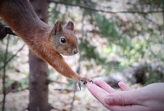 Creation of adam, squirrel version.