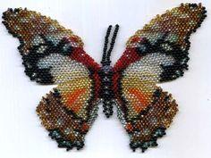 Butterfly Graphium Angolanus at Sova-Enterprises.com