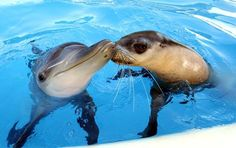 baby dolphin n seal
