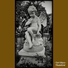 """""""Between Us"""" This cherub statue in Disneyland's New Orleans Square watches from a planter of roses. #Photography #BlackAndWhite #Cherub #Angel #Boy #Secret #Statue #Disneyland #NewOrleansSquare #Planter #Roses #Landscaping #Garden #Decor #HauntedMansion"""