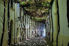 10 ruas entre as mais bonitas do mundo | CASA CLAUDIA - 4. Nesta rua na cidade espanhola de Jerez de la Frontera, as folhas das parreiras que crescem junto às paredes fazem sombra sobre o caminho.