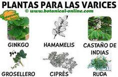 Remedios para las varices