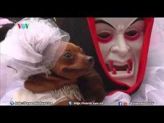Philippine: Trình diễn trang phục Halloween cho thú cưng