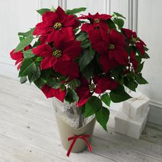 Poinsettia - Christmas in a pot!  Place next to each chair down the wedding isle on each side.