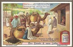 Arab Truffle Merchants With Camels GREAT c1910 Card