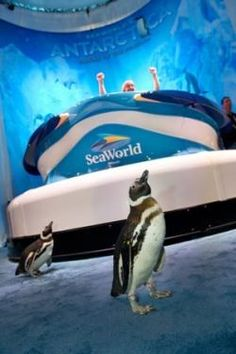 #SeaWorld #Antarctica: Empire of the Penguin