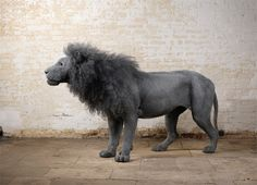 Kendra Haste - makes incredible animal sculptures out of chicken wire