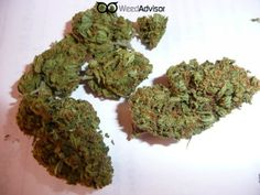 #ThaiTanic is a very compact #sativa variety with that classic chocolate Thai smell and taste.