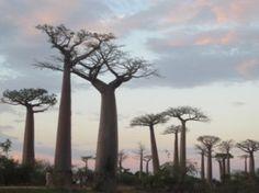 Giving Thanks...for Madagascar