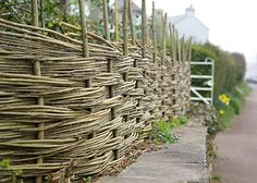 willow_fence-0175