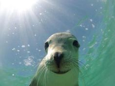 One of Rottnest's friendly locals
