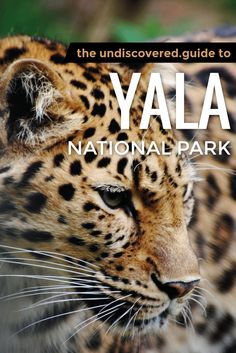 #Safari in Yala National Park, Sri Lanka, to see leopards, elephants and black bears in the wild #SriLanka #Travel