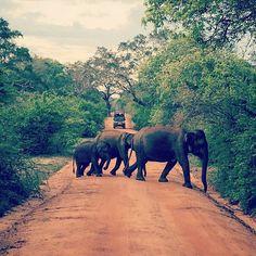 Elephants @ Yala National Park - Sri Lanka https://www.srilankatravelandtourism.com/places.php