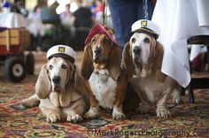 cute sailor bassets