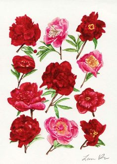 Red Peonies in Bloom - ORIGINAL Watercolor 5 x 7 - Variety of Peony Flowers Botanical Chart