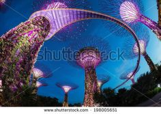 The Supertree at Gardens by the Bay