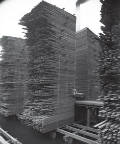Stacks of lumber drying at the Seattle Cedar Lumber Manufacturing Company's mill in Ballard, ca. A workman can be seen standing partway up one of the tall stacks of drying lumber. Cedar Lumber, Lumber Mill, Wood Mill, Old Pictures, Old Photos, Vintage Photos, Monuments, Wow Art, Big Tree