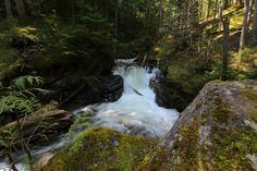 The Perfect Waterfall Road trip for the waterfall enthusiast! Trail: Begbie Falls Trail Distance: less than 1 km round trip Trail Difficulty: Easy Crystal Clear Water, Round Trip, Waterfalls, Distance, Trail, Hiking, Camping, Vacation, Explore