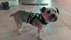 Check out this item in my Etsy shop https://www.etsy.com/listing/464119046/nfl-philadelphia-eagles-dog-harness-fun