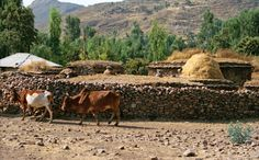 Pictures of an Ethiopian Village East Africa