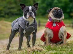 Comfy Ruffwear coats to suit all dogs in store now. Treat your doggie! http://www.packleaderdogadventures.co.uk/collections/ruffwear/coats-jackets
